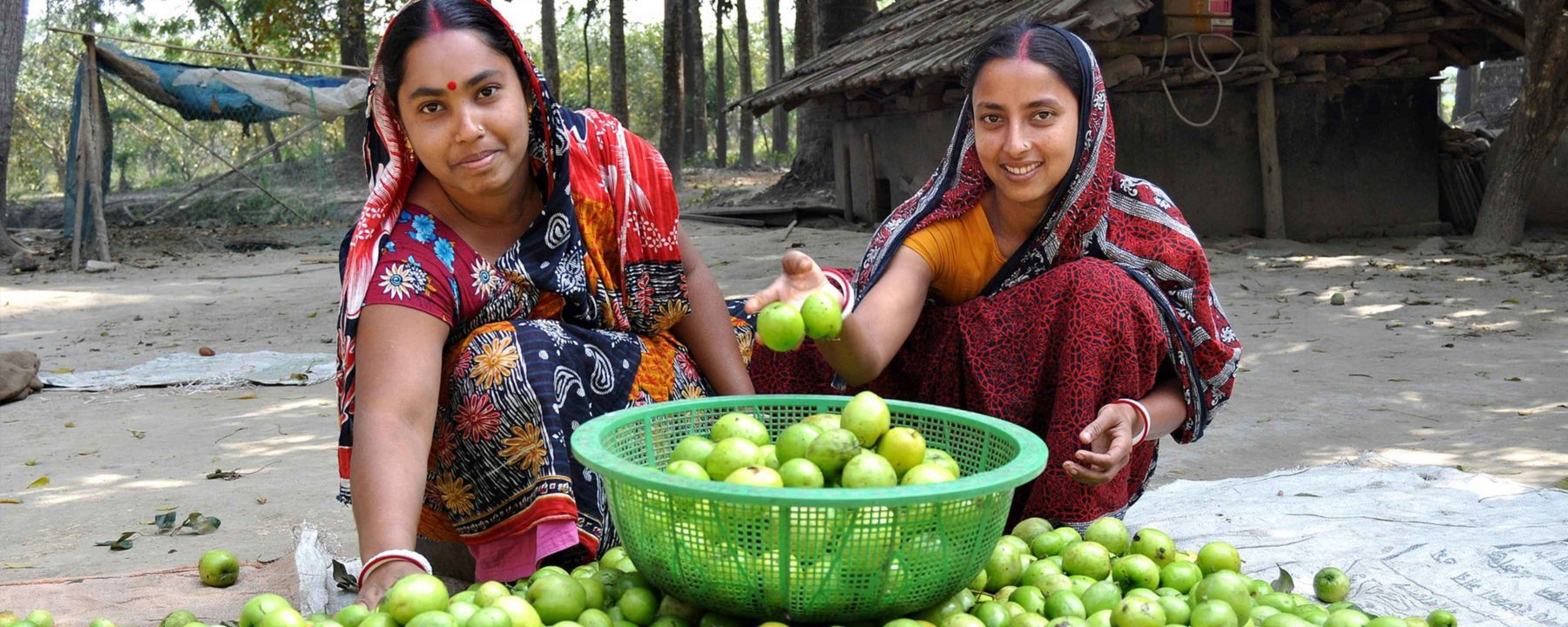 Women sorting plums in Bangladesh