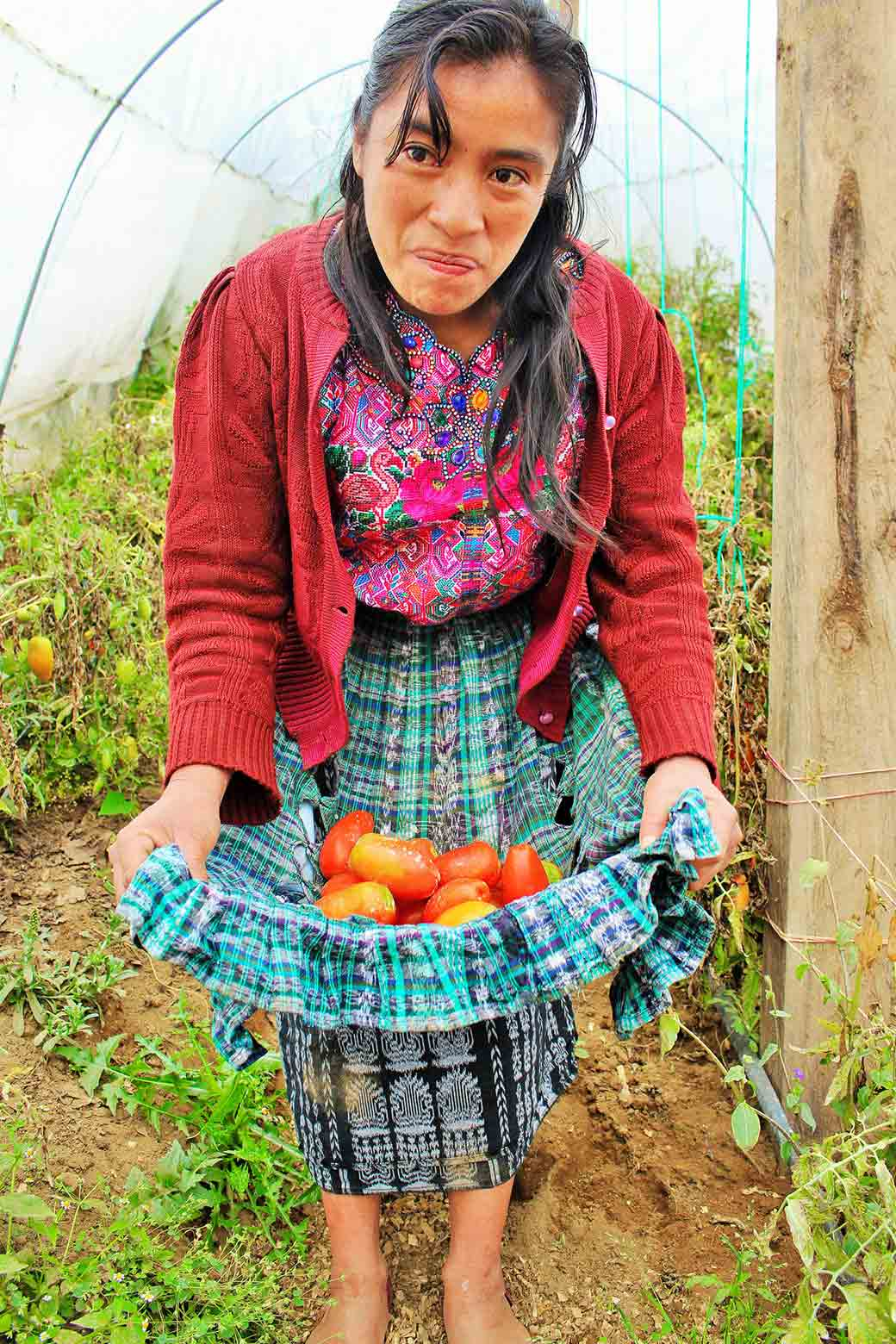 Woman with tomatoes grown in a greenhouse in Guatemala.