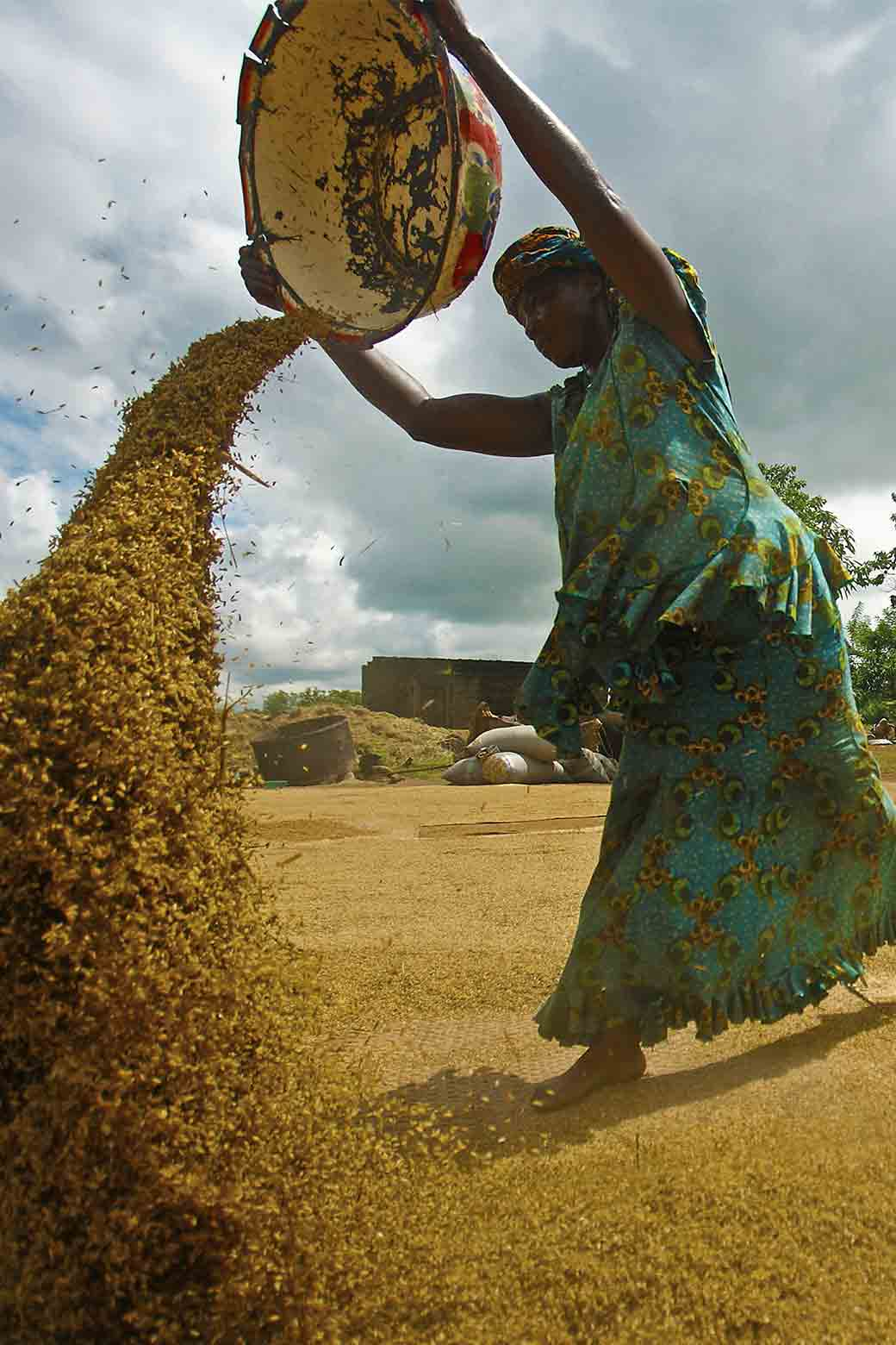 Winnowing, pictured here, improves the quality of farmer's grains by removing impurities and is predominantly carried out by women.
