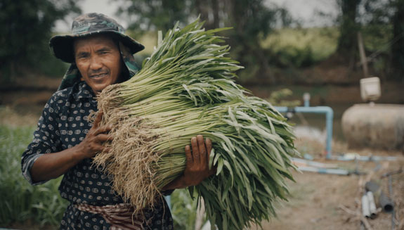 Innovations Help Farmers Grow Quality Vegetables in Cambodia